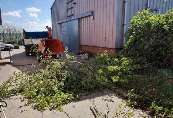 coast and country tree clearance