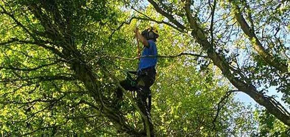coast and country tree services climbing up tree