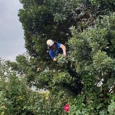 man cutting a hedge