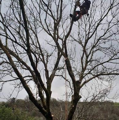man performing tree surgery