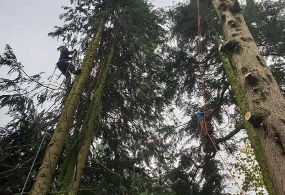 man standing halfway up a tree