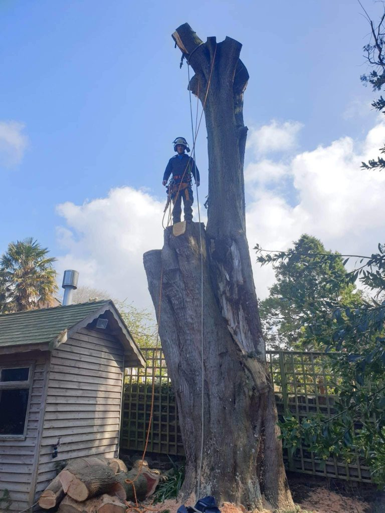 standing atop a cut down tree
