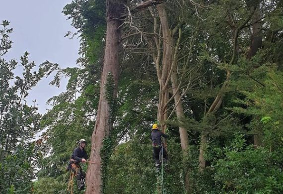 two men performing tree surgery